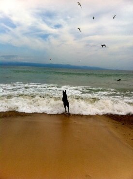 Goose enjoying beach life!